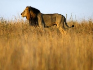 Afrika'da yabani hayat