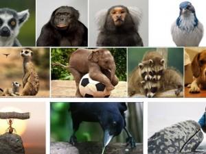 Hayvanların şaşırtan becerileri