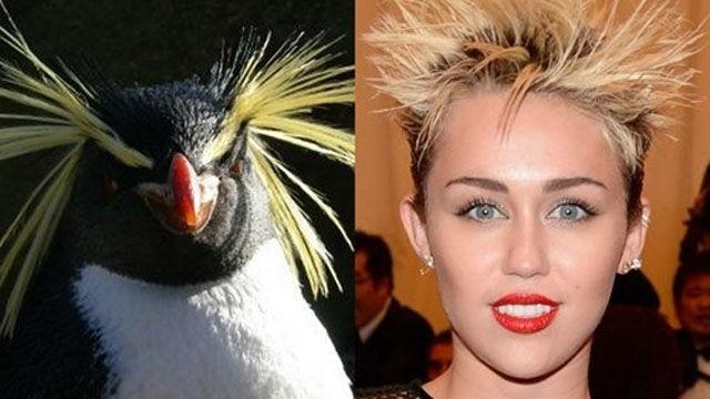 Bu benzerliklere çok güleceksiniz 10