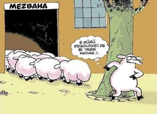 Birbirinden komik kurban karikatürleri 27