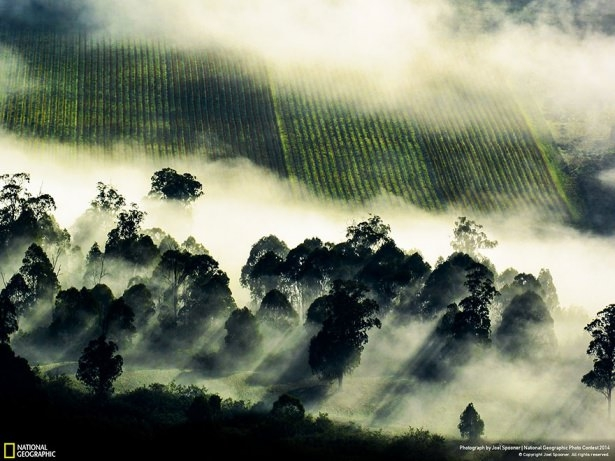 NG'den en iyi doğa fotoğrafları 10