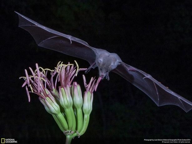 NG'den en iyi doğa fotoğrafları 13