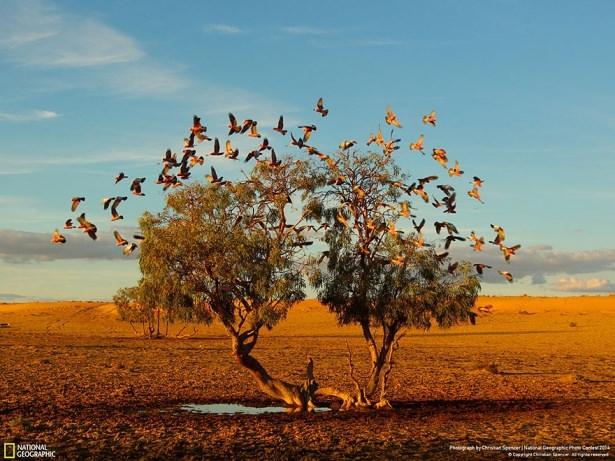 NG'den en iyi doğa fotoğrafları 14