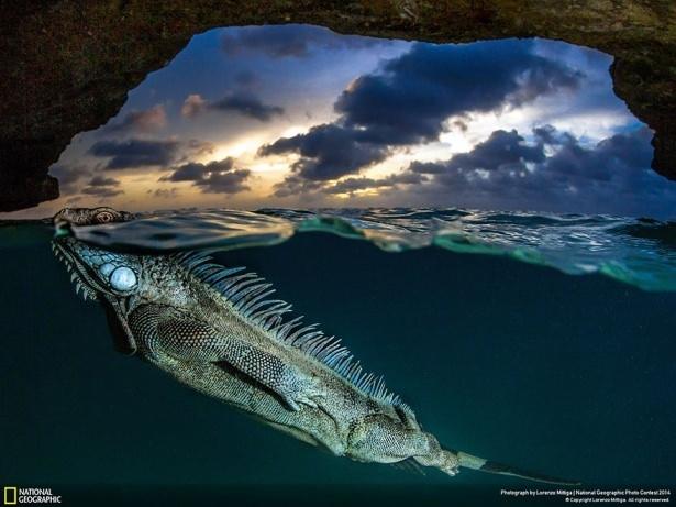 NG'den en iyi doğa fotoğrafları 16