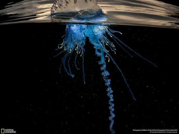 NG'den en iyi doğa fotoğrafları 17