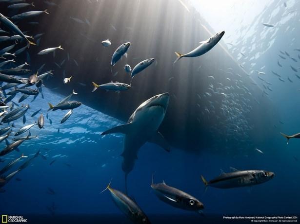 NG'den en iyi doğa fotoğrafları 4