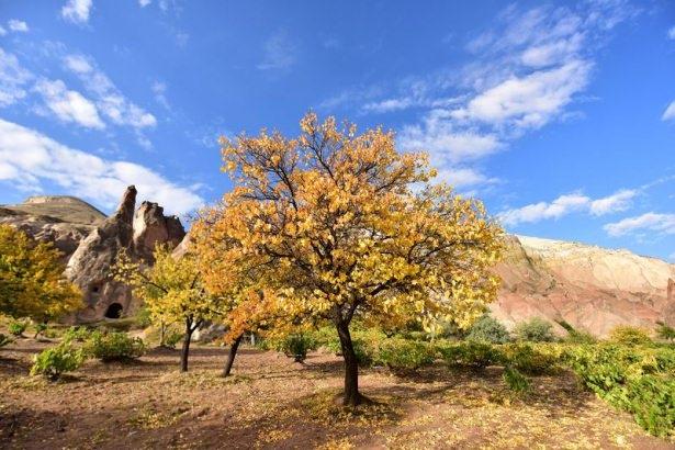 Hayran bırakan sonbahar güzelliği 25
