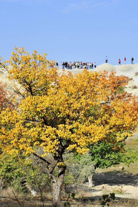 Hayran bırakan sonbahar güzelliği 5