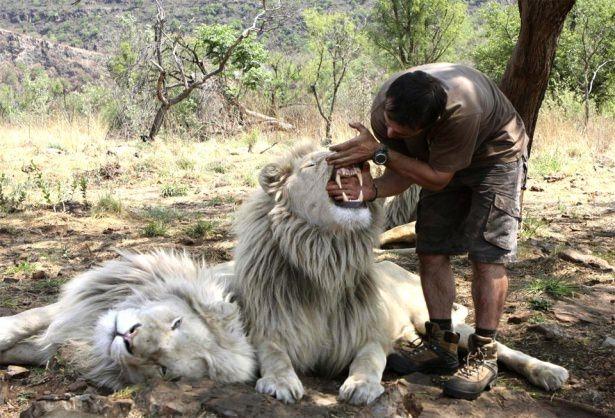 Vahşi hayvanlar ile yaşayan korkusuz insanlar 14