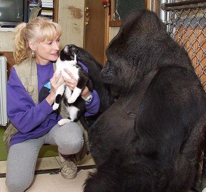 Vahşi hayvanlar ile yaşayan korkusuz insanlar 31