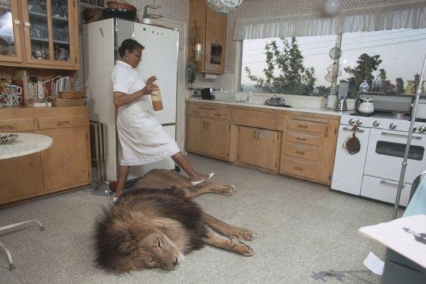 Vahşi hayvanlar ile yaşayan korkusuz insanlar 4