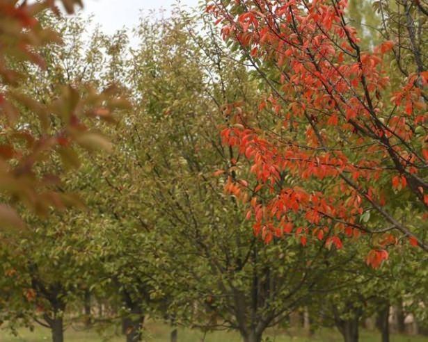 Türkiye'de hazan mevsimi 2