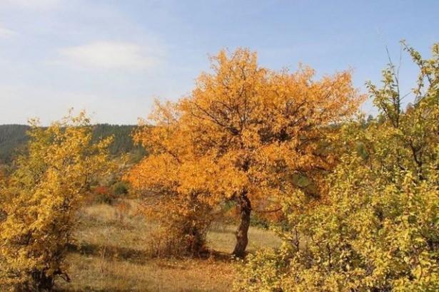 Türkiye'de hazan mevsimi 22