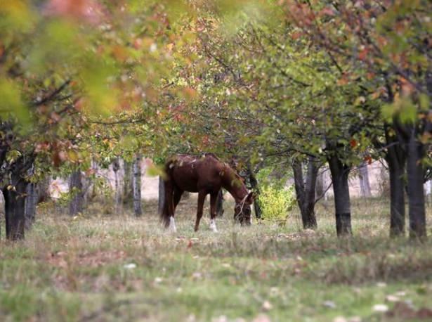 Türkiye'de hazan mevsimi 32