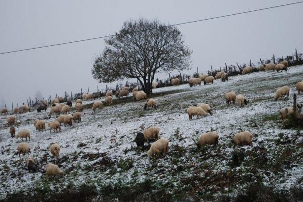 Türkiye'den kar manzaraları 88