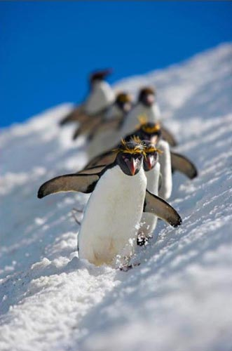 Vahşi Doğa Ödüllü Fotograflar 10