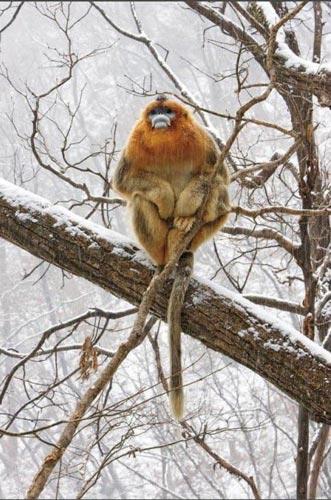 Vahşi Doğa Ödüllü Fotograflar 4