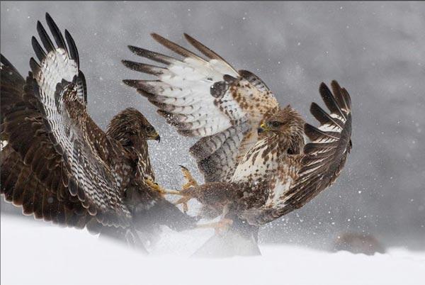 Vahşi Doğa Ödüllü Fotograflar 7