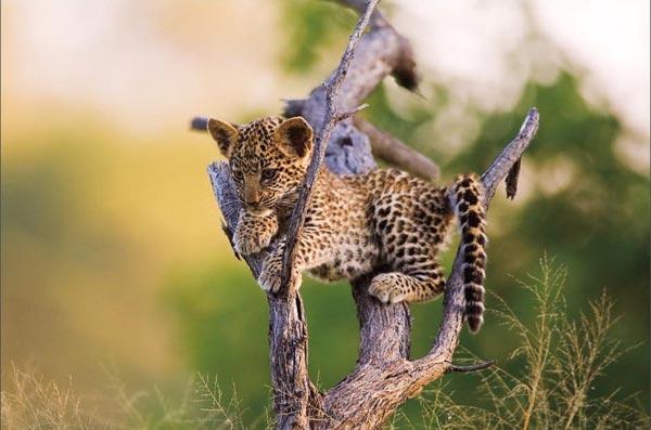 Vahşi Doğa Ödüllü Fotograflar 8