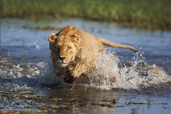 Vahşi Doğa Ödüllü Fotograflar