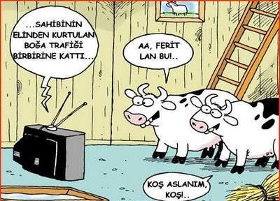 Kurbanlık karikatürler tam şenlik! 3