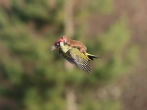 Vahşi doğanın en ilginç anları