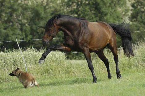 At itten dişli çıkınca 4