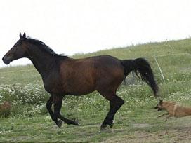 At itten dişli çıkınca