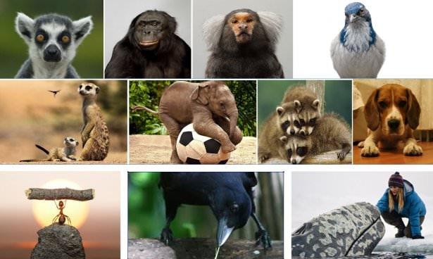 Hayvanların şaşırtan becerileri 1