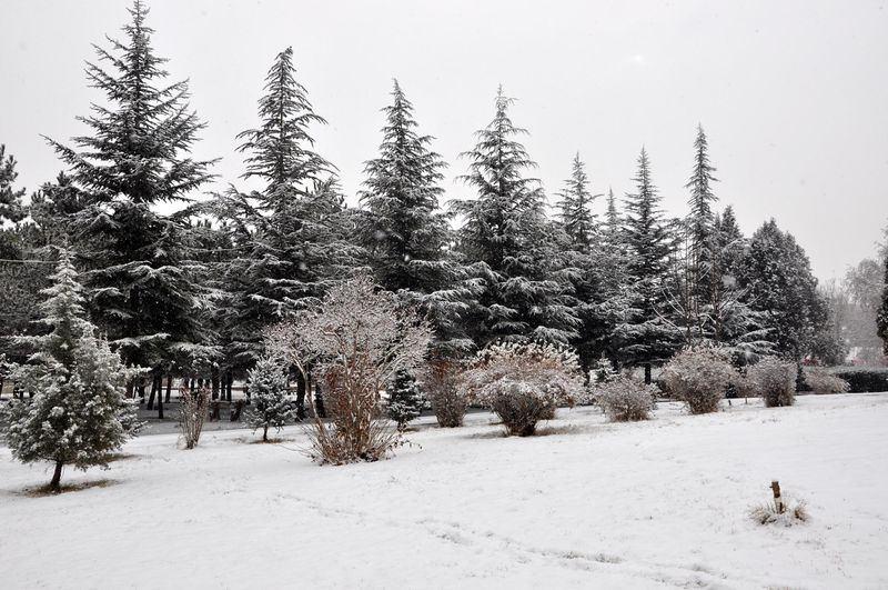 İşte yurttan kar manzaraları... 108