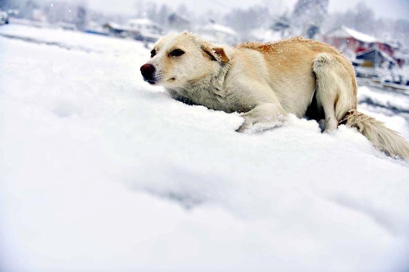 İşte yurttan kar manzaraları... 6