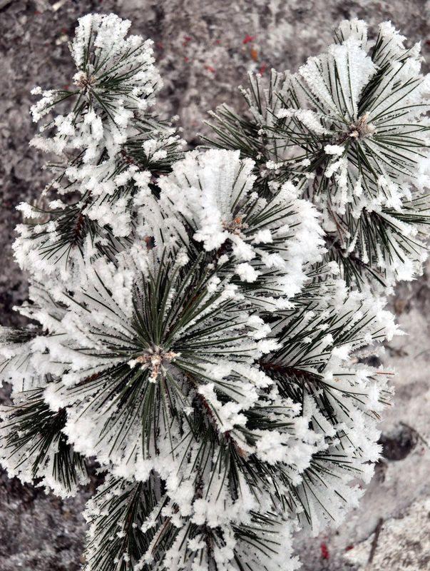 İşte yurttan kar manzaraları... 68