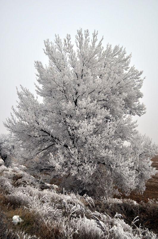 İşte yurttan kar manzaraları... 74