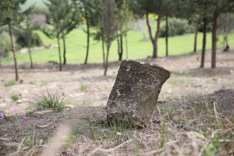 Çanakkale'de bir asır sonra ortaya çıktı 11