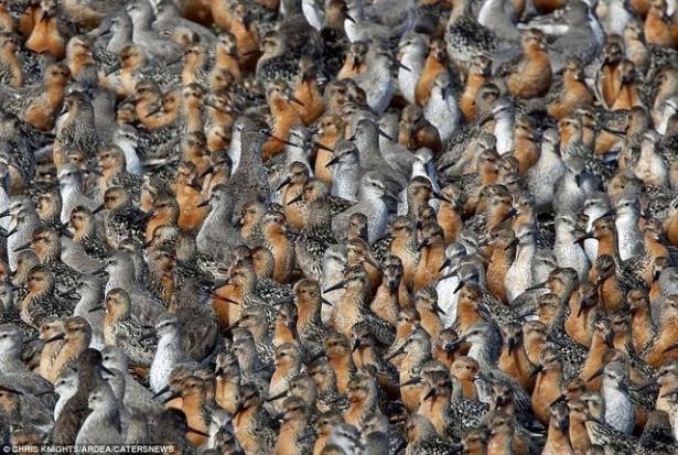 Hayvanların büyük göçlerinden muhteşem kareler 20