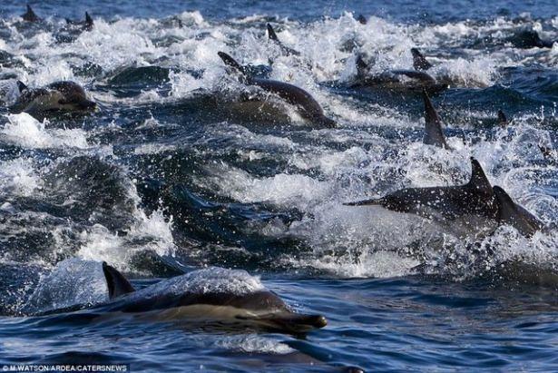 Hayvanların büyük göçlerinden muhteşem kareler 21