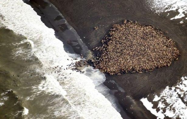 Hayvanların büyük göçlerinden muhteşem kareler 3