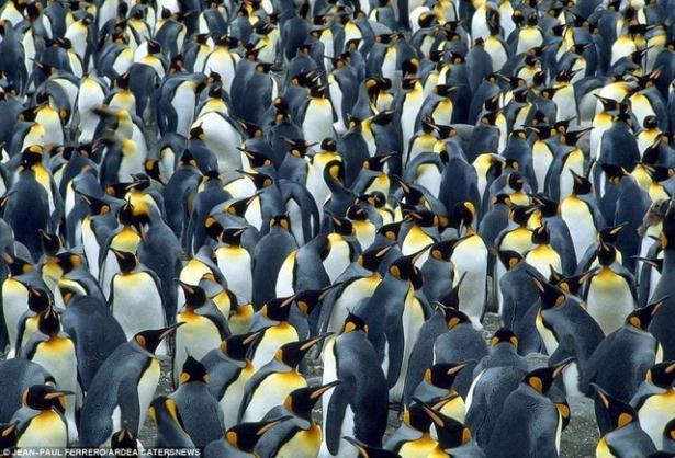 Hayvanların büyük göçlerinden muhteşem kareler 6