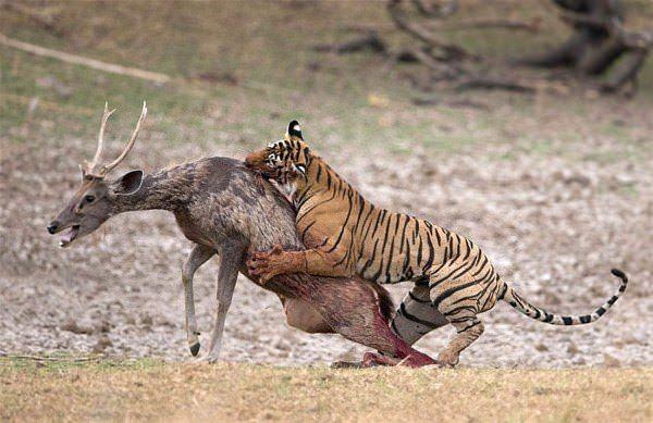 Hayvanlar dünyasından vahşi kareler! 1