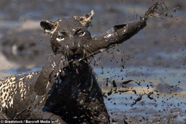 Hayvanlar dünyasından vahşi kareler! 100