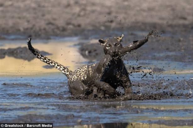Hayvanlar dünyasından vahşi kareler! 101