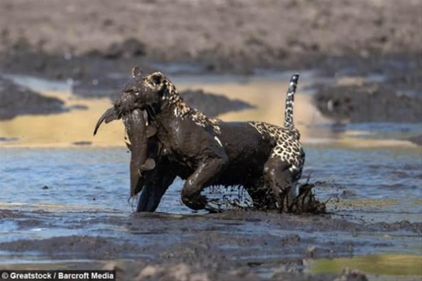 Hayvanlar dünyasından vahşi kareler! 102