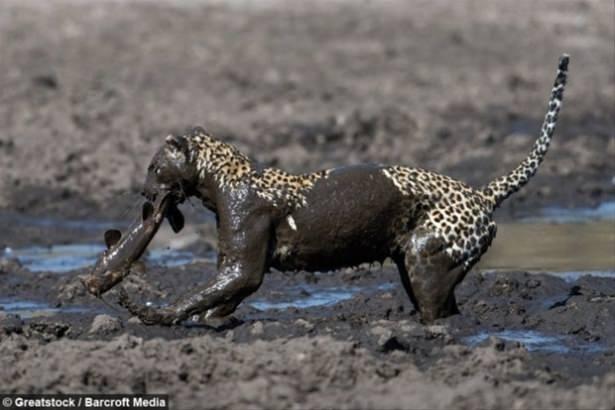 Hayvanlar dünyasından vahşi kareler! 104