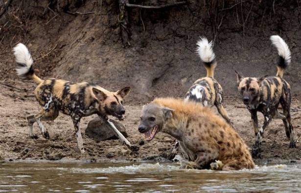 Hayvanlar dünyasından vahşi kareler! 107