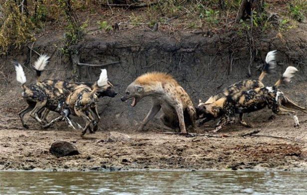 Hayvanlar dünyasından vahşi kareler! 108