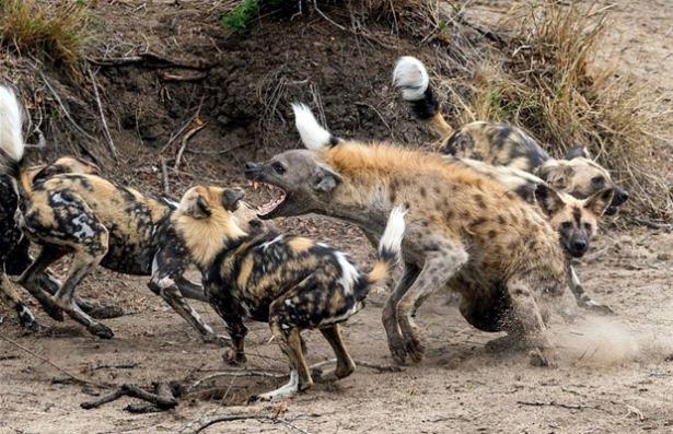 Hayvanlar dünyasından vahşi kareler! 109