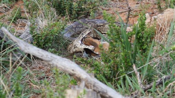 Hayvanlar dünyasından vahşi kareler! 11