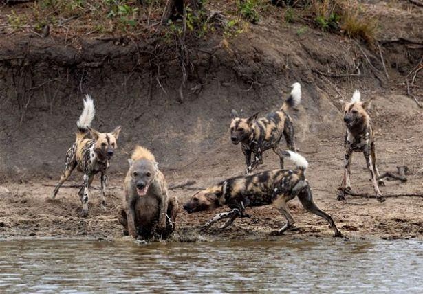 Hayvanlar dünyasından vahşi kareler! 110