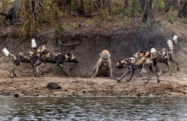 Hayvanlar dünyasından vahşi kareler! 111