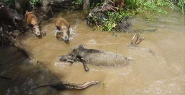 Hayvanlar dünyasından vahşi kareler! 114